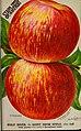 Stark fruits (1896) (20356797430).jpg