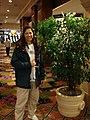 Starr-071224-0619-Ficus benjamina-in pot with Kim-Californian Casino Las Vegas-Nevada (31369890152).jpg
