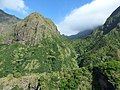 Starr-151005-0195-Aleurites moluccana-aerial view-West Maui-Maui (26282807665).jpg