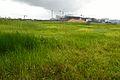 State Bank Institute of Management - Site - Rajarhat - North 24 Parganas 2013-06-15 0173.JPG