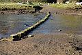 Stepping stones in Lerryn.jpg