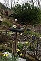 Stone pine and Sempervivum - Flickr - peganum.jpg