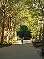 Stuyvesant Town New York Tree lined path.jpg
