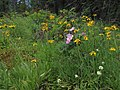 Summer Wildflowers in Wrinkly Face Provincial Park.jpg
