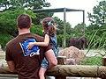 Summer zoo.jpg