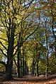 Sunday 9 November 2014, max autumncolours in the forests. Posbank Velp - panoramio.jpg