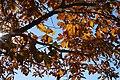 Sunlight through Durand Oak by Dennis Murphy, November 3, 2015.jpg