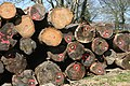 Superposition de bille de bois entreposé sur l'aire qui leur est alloué.jpg