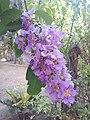 Suvarnabhumi Orchids Farm IMG 20160322 080511 (27447082755).jpg