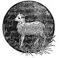 Sweet Lamb.jpg