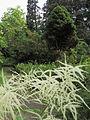 Syretsky arboretum 3.JPG