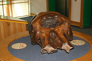 The Children's Museum of Indianapolis - A mastodon skull exhibit. The museum encourages children to touch many of their exhibits, such as this one.