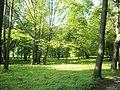 TYCZYN park (1).JPG