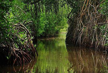 Tacarigua Lagoon%2C Miranda State%2C Venezuela