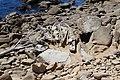 Tafoni salt point state park.jpg