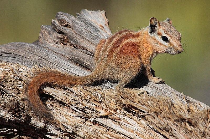 soorten noten voor eekhoorns
