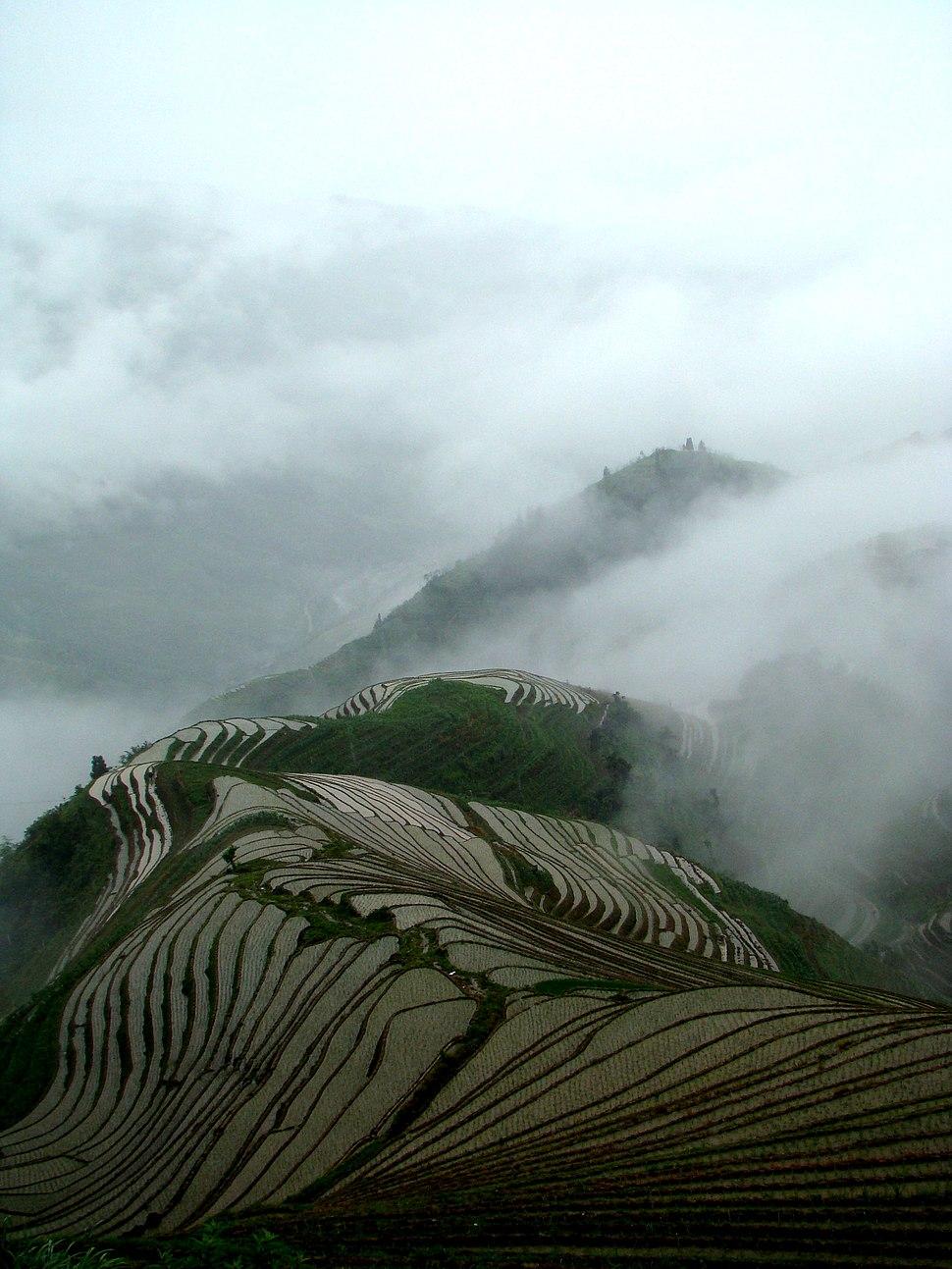 Terrace field guangxi longji china