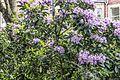 The Belfast Botanic Gardens - panoramio (1).jpg