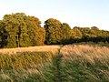 The Green - geograph.org.uk - 1474724.jpg