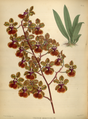 The Orchid Album-01-0098-0032.png