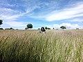 The Savanna Land.jpg