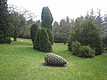 The conifer collection, Threave Gardens - geograph.org.uk - 382630.jpg