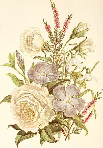 File:The language of flowers, or, Floral emblems of thoughts, feelings, and sentiments (1869) (14742938551).jpg