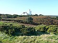 The lighthouse and coastal heathland, Cromer - geograph.org.uk - 1049767.jpg
