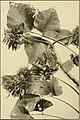 The ornamental trees of Hawaii (1917) (14742966916).jpg