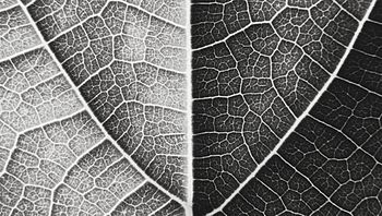 The other side of the LEAF.jpg