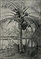 The story of Hawaii; (1898) (14763108165).jpg
