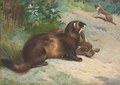 Thorburn polecat rabbit & weasel.png