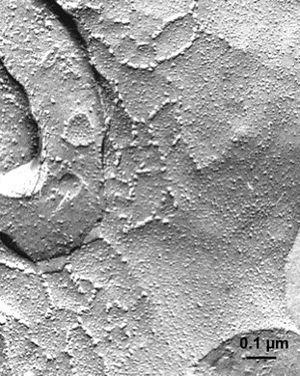 Water vapor - Recovery of meteorites in Antarctica (ANSMET)