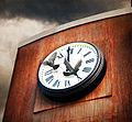 Time Flies (5142802726).jpg