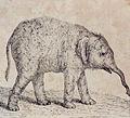 Tischbein Goethe Elefant.jpg