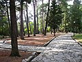 Tivat, Montenegro - panoramio (21).jpg