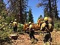 Tree Mortality Crews on the Sierra NF (27144742039).jpg