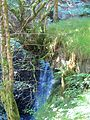 Tree growing in the air with waterfall behind - July 2012 - panoramio.jpg