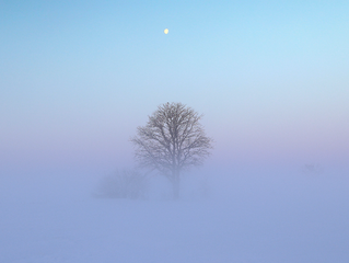 Frozen fog during extreme cold with tree in farmers field at daybreak