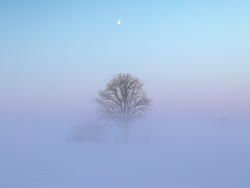 Wikipedia:Featured picture candidates/Set:The Fog - Wikipedia