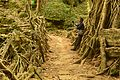 Tree root bridge.jpg