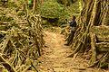 Tree root bridge.jpg