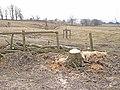 Tree stump, near Birtley - geograph.org.uk - 1747779.jpg