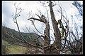 Trees (20560236862).jpg