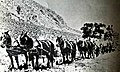 Twelve horse team Pine grove, NV, circa 1880.jpg