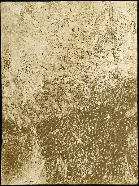 File:Tylicki Natural Art 100.jpg