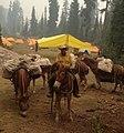 U.S. Forest Service packer Michael Morse (16325428466).jpg