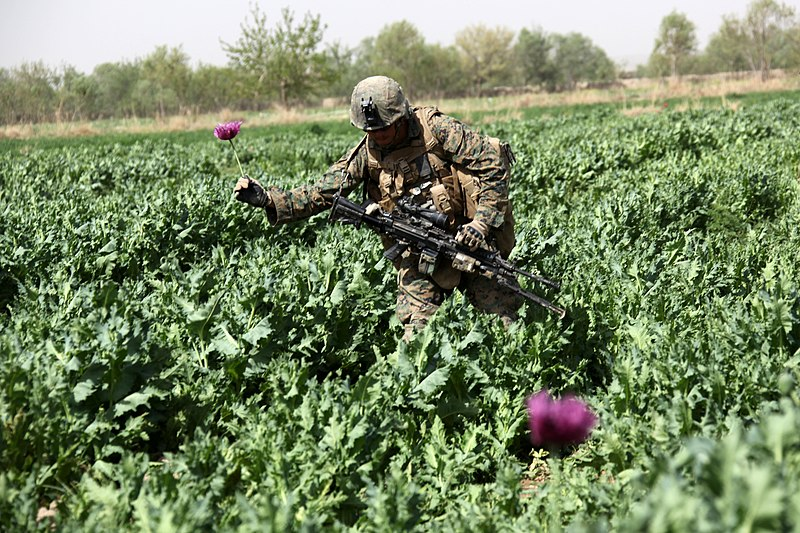 File:US Marine passing through Afghan Poppy field.jpg