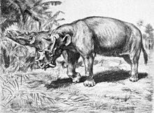 Uintatherium Wikipedia