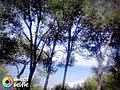 Un beau paysage a Ténés.jpg